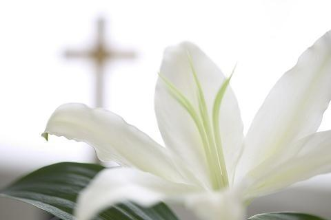 Easter_Lily_sm